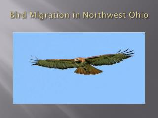 Bird Migration in Northwest Ohio