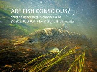 ARE FISH CONSCIOUS? Studies described in chapter 4 of Do Fish Feel Pain?  by Victoria Braithwaite