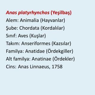 Anas platyrhynchos ( Yeşilbaş ) Alem : Animalia ( Hayvanlar ) Şube : Chordata ( Kordalılar )
