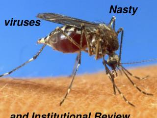Nasty viruses   and Institutional Review Boards