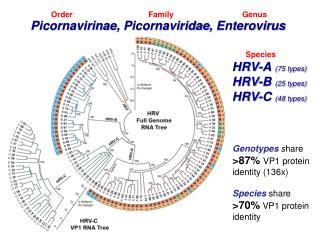 Picornavirinae ,  Picornaviridae ,  Enterovirus