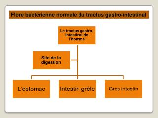 Flore bact�rienne normale du tractus gastro-intestinal