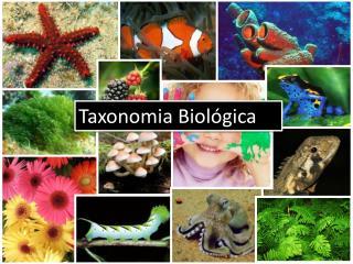Taxonomia Biológica