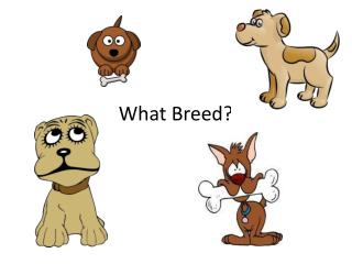 What Breed?