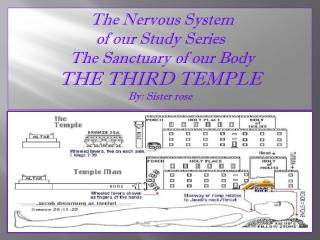 The Nervous  System  of  our Study Series   The Sanctuary of our Body THE THIRD TEMPLE