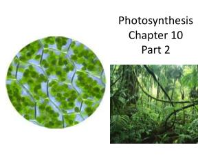 Photosynthesis Chapter  10 Part 2