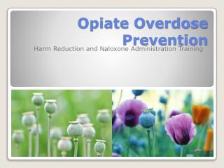 Opiate Overdose Prevention