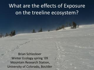 What are the  effects  of Exposure on the treeline ecosystem?