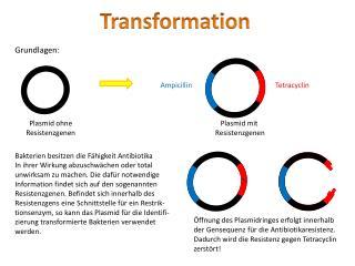 Plasmid ohne Resistenzgenen
