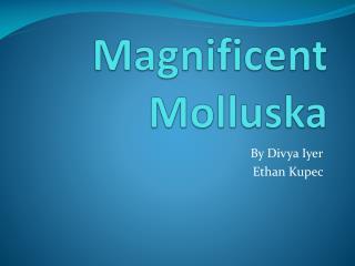 Magnificent  Molluska