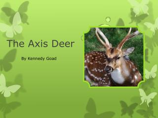 The Axis Deer