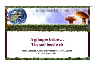 What is soil biology   What role does it play in soil quality
