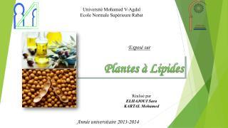 Plantes à Lipides