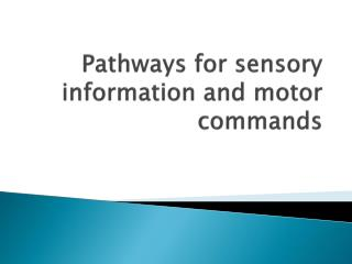 Pathways for sensory information and motor commands