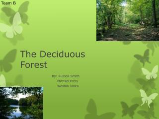 The Deciduous Forest