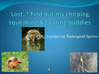 Lost..! Find out my chirping, squeaking & roaring buddies