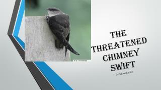 the threatened Chimney swift By:Moochacho