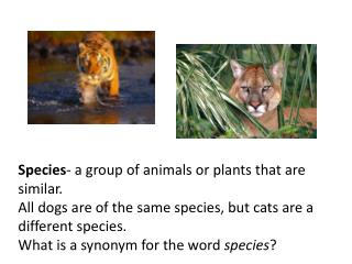 Species - a group of animals or plants that are similar.