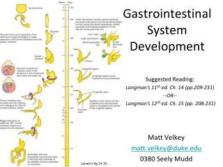 Gastrointestinal System Development
