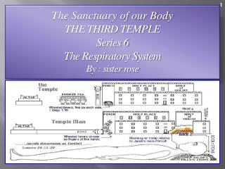 The Sanctuary of our Body THE THIRD TEMPLE Series 6     The Respiratory System  By : sister rose