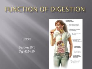 FUNCTION OF DIGESTION