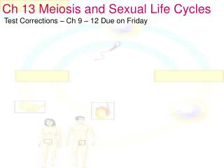 Ch 13 Meiosis and Sexual Life Cycles