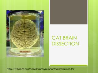 CAT BRAIN DISSECTION