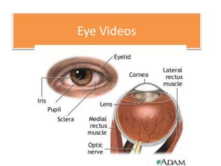 Eye Videos
