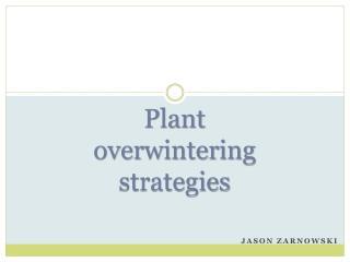 Plant overwintering strategies
