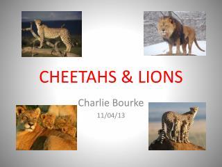 CHEETAHS  &  LIONS
