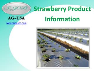 Strawberry Product  Information