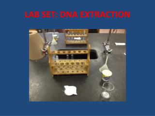 LAB SET: DNA EXTRACTION