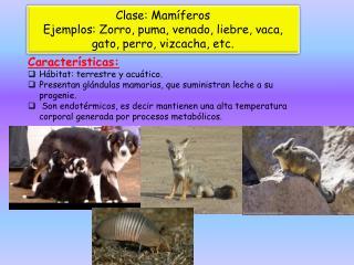 Clase: Mamíferos Ejemplos: Zorro, puma, venado, liebre, vaca, gato, perro, vizcacha, etc.