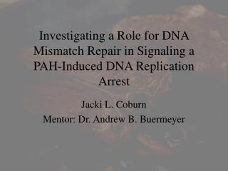 Investigating a Role for DNA Mismatch Repair in Signaling a PAH-Induced DNA Replication Arrest