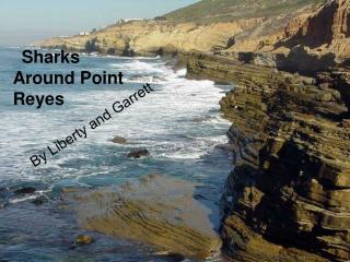 Sharks Around Point Reyes