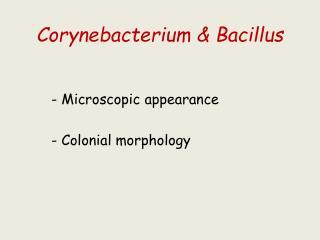 Corynebacterium  & Bacillus