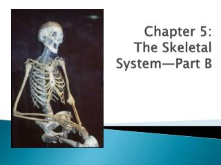Chapter 5: The Skeletal System—Part B