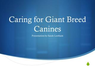 Caring for Giant Breed Canines