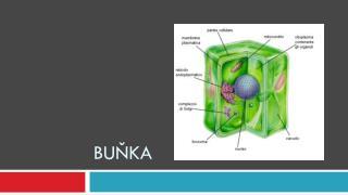 Buňka