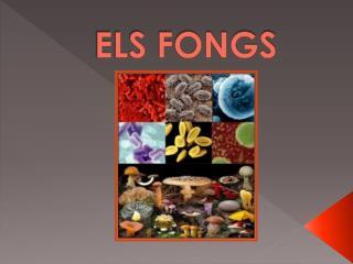 ELS FONGS