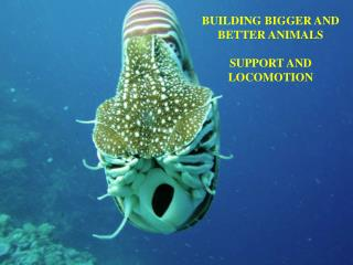 BUILDING BIGGER AND BETTER ANIMALS  SUPPORT AND LOCOMOTION