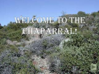 WELCOME TO THE CHAPARRAL!