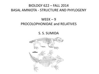 BIOLOGY 622 – FALL 2014 BASAL AMNIOTA - STRUCTURE AND PHYLOGENY WEEK –  9