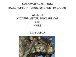 BIOLOGY 622 – FALL 2014 BASAL AMNIOTA - STRUCTURE AND PHYLOGENY WEEK –  8