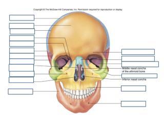 Review Skull