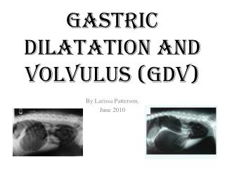 Gastric Dilatation and Volvulus (GDV)
