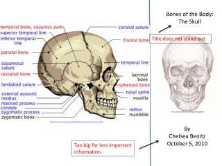 Bones of the Body: The Skull