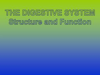 THE DIGESTIVE SYSTEM Structure and Function