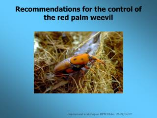 Recommendations for the control of the red palm weevil