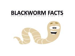 Blackworm fACTS
